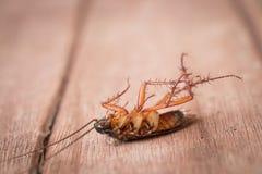 Dode kakkerlakken stock fotografie