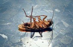 Dode kakkerlakken in de zon op de marmeren vloer royalty-vrije stock foto's