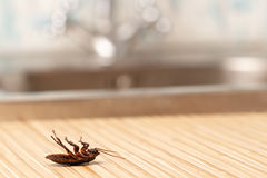 Dode kakkerlakken in een flatgebouw Stock Foto's