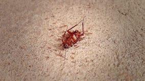 Dode kakkerlakken op cementvloer stock footage