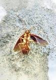 Dode kakkerlakken op de cementvloer royalty-vrije stock afbeeldingen