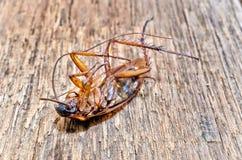 Dode kakkerlakken op de houten vloer, Gezondheidszorgconcept royalty-vrije stock fotografie