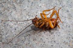Dode kakkerlakken op de vloertegels Stock Afbeelding