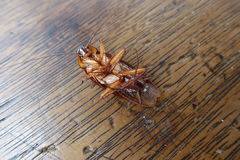 Dode kakkerlakken op houten stock foto