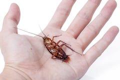 Dode kakkerlakken witte achtergrond Stock Foto's