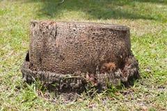 Dode kokospalm Stock Afbeeldingen