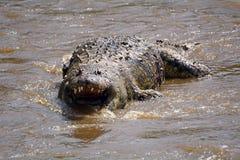 Dode krokodil in Mara River, Maasai Mara Game Reserve, Kenia Stock Foto's