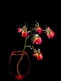 Dode rozen in vaas die op zwarte wordt geïsoleerd Royalty-vrije Stock Foto's