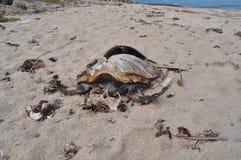Dode schildpad Stock Foto's