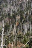 Dode sparren Fraser in Rokerig Nationaal Park royalty-vrije stock afbeelding
