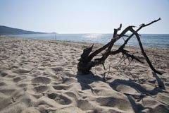 Dode tak op een verlaten strand Stock Fotografie