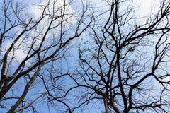 Dode takken in de herfst, op de rug van de hemel, in de winter Stock Fotografie