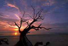 Dode takken tegen dramatische zonsopgang. Stock Foto's