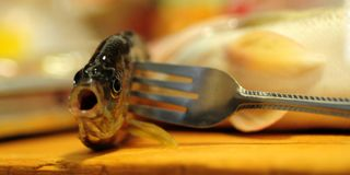 Dode vissen Royalty-vrije Stock Afbeeldingen