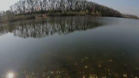 Dode vissen dichtbij de meerkust stock footage