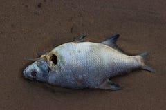 Dode vissen op het strand? beeld opgezet met verfraaid biohazard symbool Royalty-vrije Stock Afbeelding