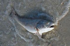 Dode vissen op het strand? beeld opgezet met verfraaid biohazard symbool Royalty-vrije Stock Foto