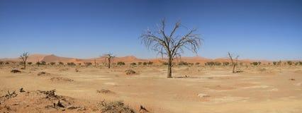 Dode vlei Namibië Stock Foto's