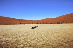 Dode vlei Namibië Stock Afbeeldingen