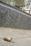 Dode vogel Stock Foto's