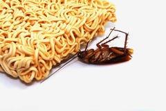 Dode Zwart-witte kakkerlakken stock afbeelding