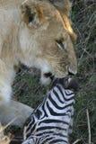 Dodelijke kus Royalty-vrije Stock Afbeelding