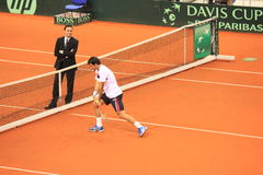 Dodig warming up Royalty Free Stock Image