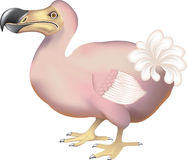 Dodo Stock Photo