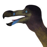 Dodo Bird Head vektor illustrationer