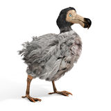 Dodo Bird Illustration maschio Fotografie Stock
