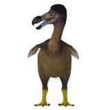 Dodo Bird on White Stock Image