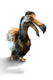 The dodo Royalty Free Stock Photography