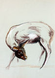 Doe drawing. Original pastel and  hand drawn painting or  working  sketch of a doe.Free composition Stock Image
