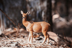 Doe in forest. Deer toy figurine in situation. Royalty Free Stock Photo