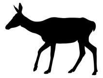 Doe. Vector illustration of doe silhouette vector illustration