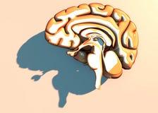 Doenças degenerativos do cérebro, Parkinson, sinapses, neurônios, ` s de Alzheimer Foto de Stock Royalty Free