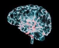 Doenças degenerativos do cérebro, ` s de Parkinson, ` s de Alzheimer, ilustração do vetor