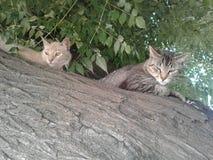 Doen schrikken & gekke kittys stock fotografie