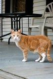 Doen schrikken kat Stock Foto's