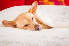 Doente do cão, doente ou sono imagens de stock royalty free