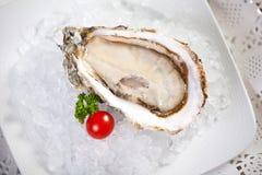 dof小冰的牡蛎 免版税库存图片