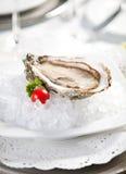 dof小冰的牡蛎 免版税图库摄影