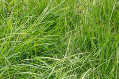 dof ανασκόπησης πράσινος ρηχός χλόης πράσινη σύσταση χλόης Στοκ εικόνα με δικαίωμα ελεύθερης χρήσης