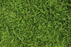 dof ανασκόπησης πράσινος ρηχός χλόης Στοκ Εικόνα