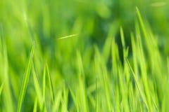 dof ανασκόπησης στενό ρηχό θερινό θέμα φύσης χλόης πράσινο επάνω Στοκ Φωτογραφία