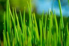 dof ανασκόπησης στενό ρηχό θερινό θέμα φύσης χλόης πράσινο επάνω Στοκ Εικόνες