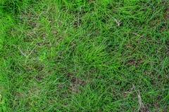 dof ανασκόπησης στενό ρηχό θερινό θέμα φύσης χλόης πράσινο επάνω Στοκ φωτογραφίες με δικαίωμα ελεύθερης χρήσης