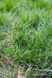 dof ανασκόπησης στενό ρηχό θερινό θέμα φύσης χλόης πράσινο επάνω Στοκ εικόνες με δικαίωμα ελεύθερης χρήσης