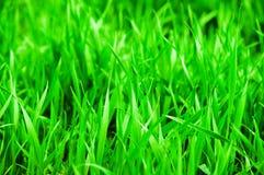 dof ανασκόπησης στενό ρηχό θερινό θέμα φύσης χλόης πράσινο επάνω ενάντια ανασκόπησης μπλε σύννεφων πεδίων άσπρο σε wispy ουρανού  Στοκ φωτογραφίες με δικαίωμα ελεύθερης χρήσης