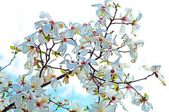 dof ανθών αζαλεών στενή ρηχή άνοιξη λουλουδιών επάνω Άσπρο magnolia άνθισης Άνοιξη Κήπος Στοκ Εικόνες